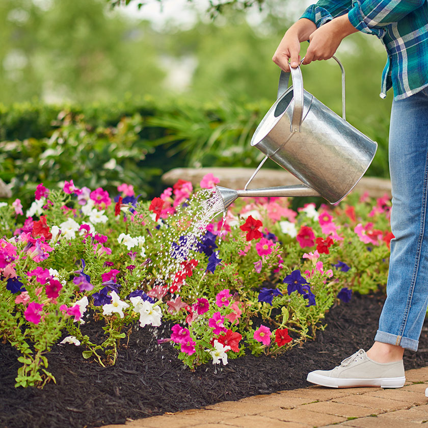 Watering Outdoors with Miracle-Gro Bloom Booster