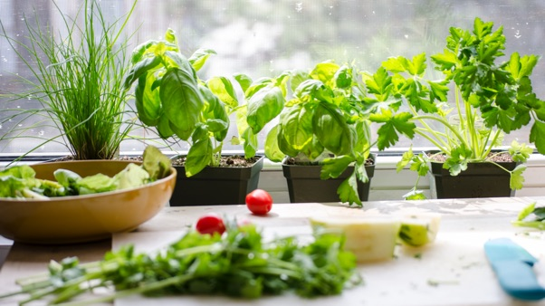 Top Tips for Indoor Growing: herbs growing on kitchen windowsill