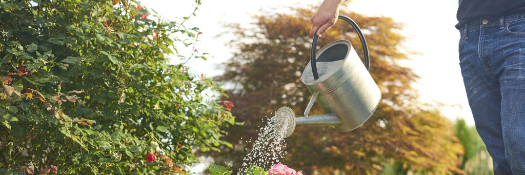 Guide To Garden Watering Methods