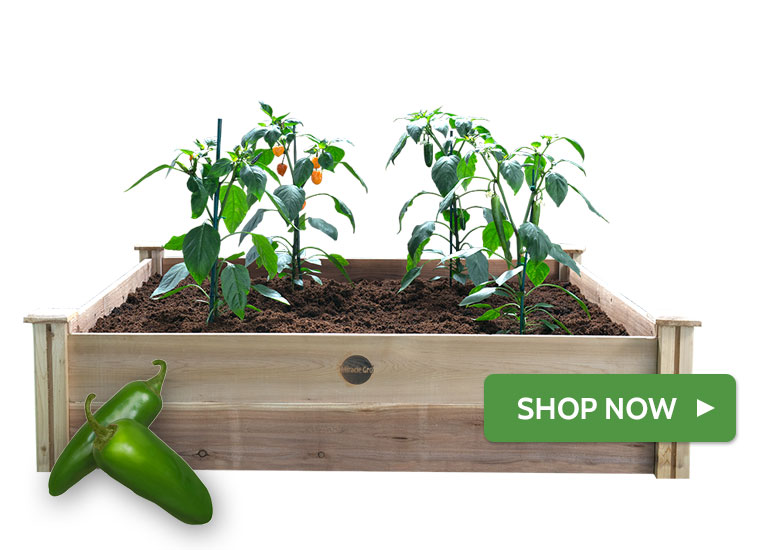 Raised Hot Pepper Garden
