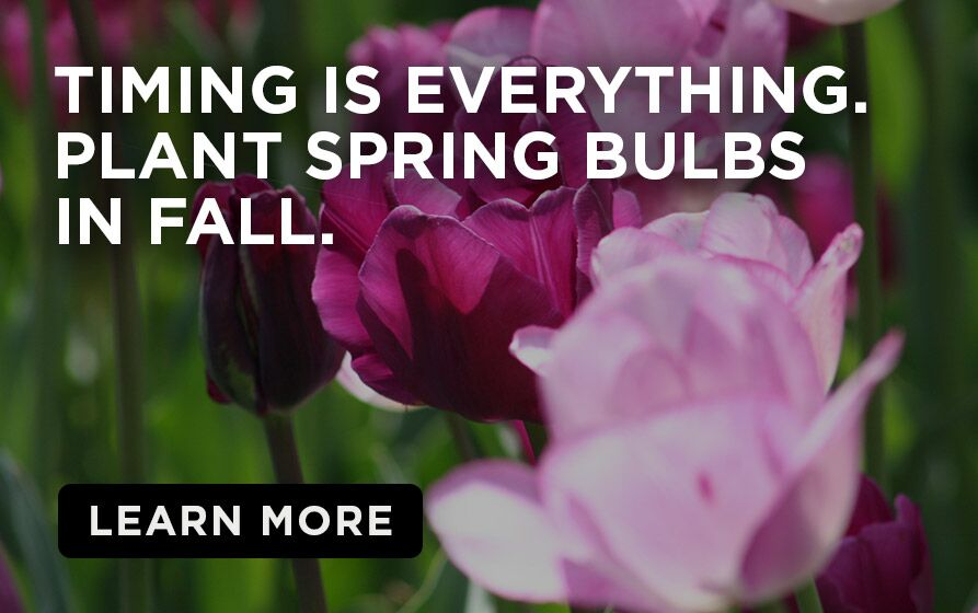 Purple Spring  Bulb flowers with caption- TIming is everything. plant Spring Bulbs in the Fall