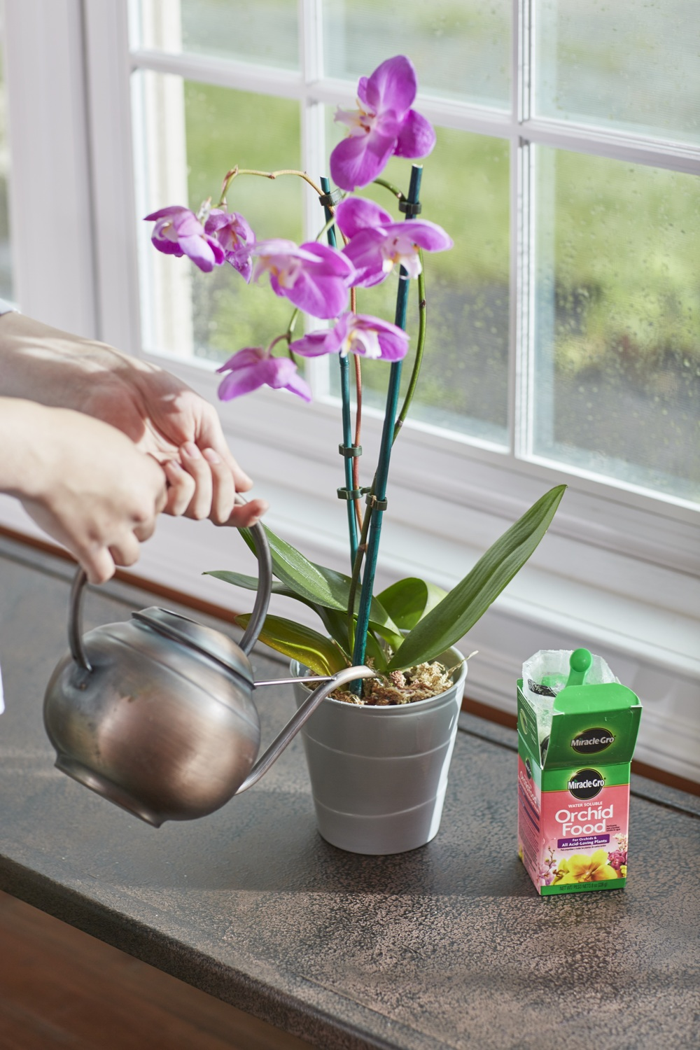 Miracle Gro Water Soluble Orchid Food Plant Food Miracle Gro