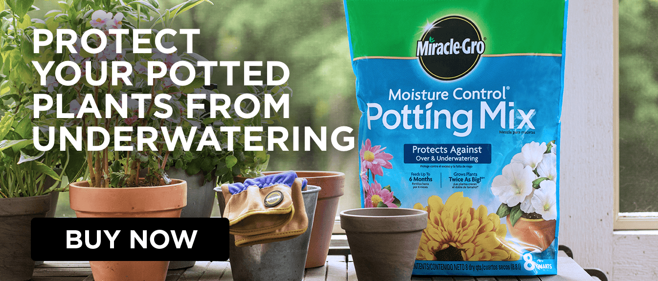 Potting Mix sitting on counter next to terra cotta pots