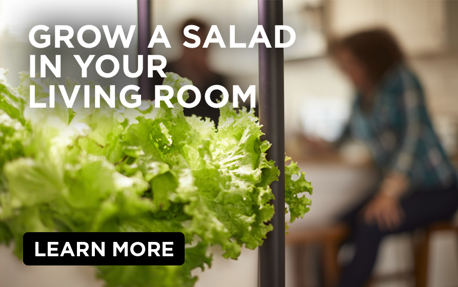 Grow a Salad in Your Living Room