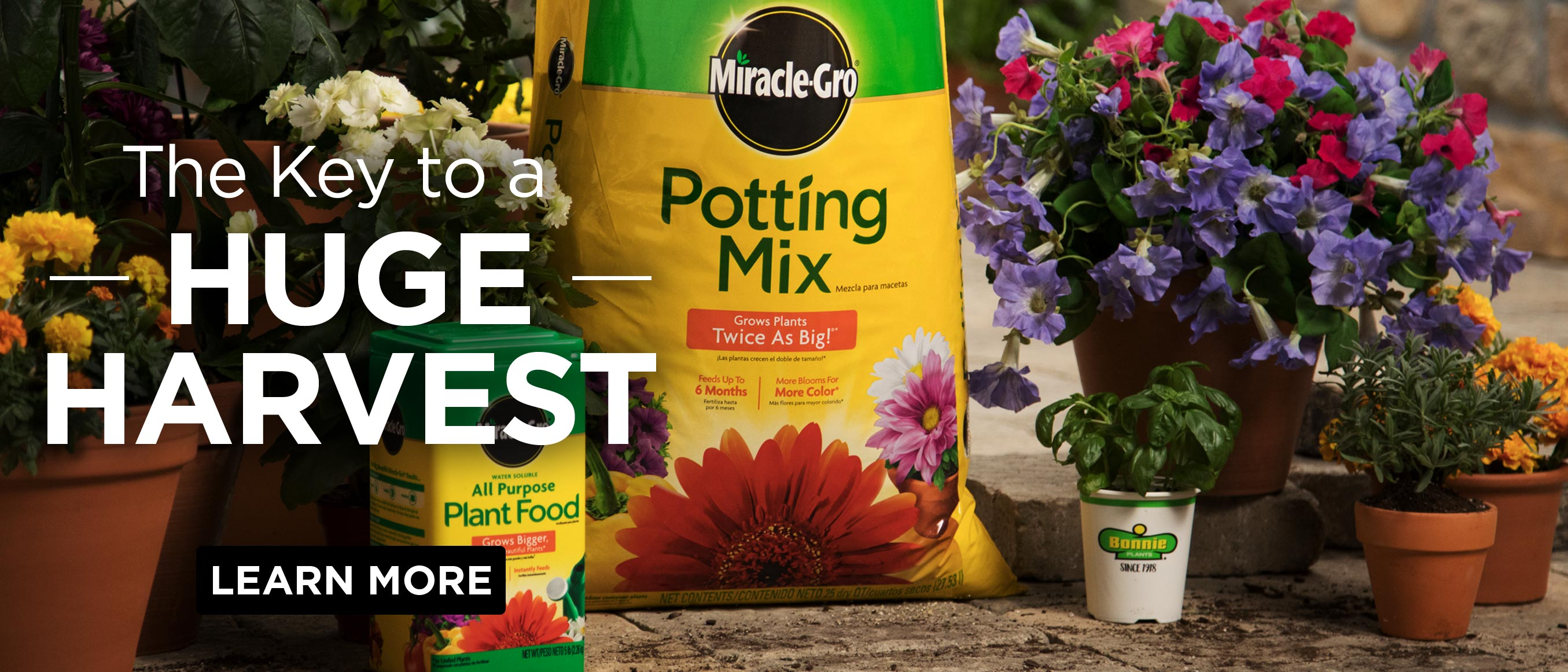 Home Gardening Tips and Landscaping Ideas | Miracle-Gro