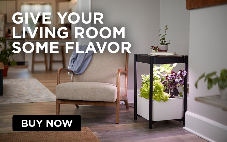 Give Your Living Room Some Flavor