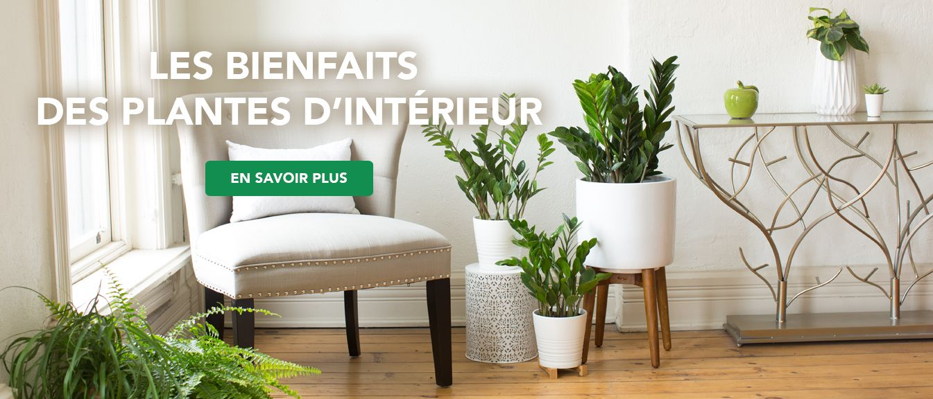 House plants sitting by white chair with caption- Benefits of Houseplants