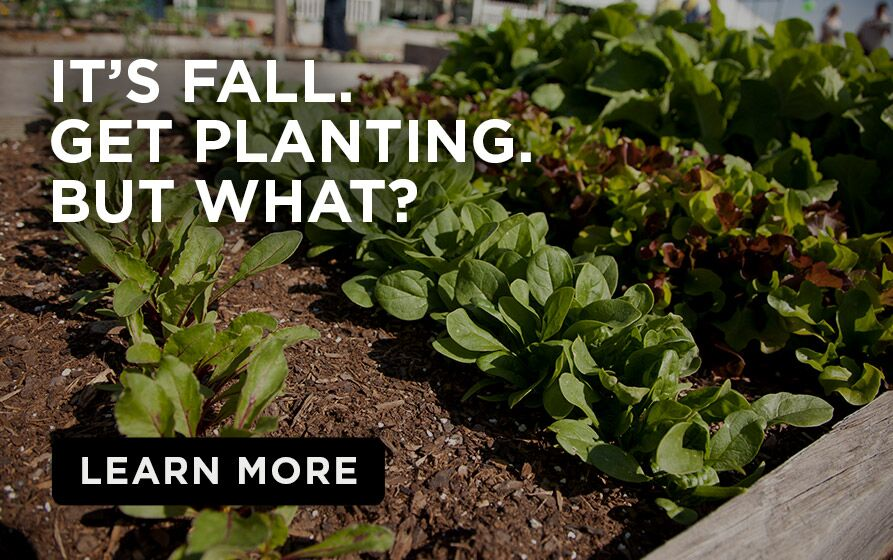 Plants in garden bed with caption- It's fall. Get planting. But What?