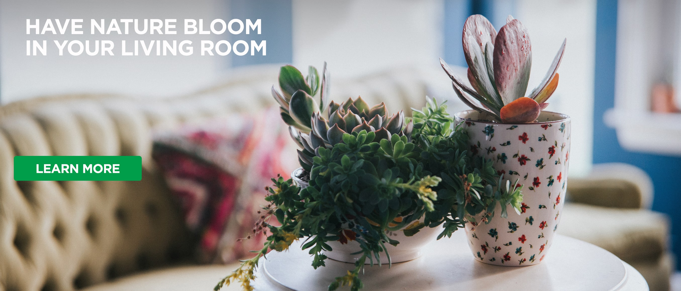 Succulents on table in living room