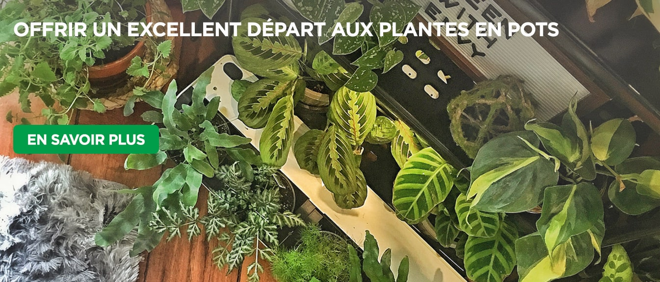 Houseplants in pots on wooden floor