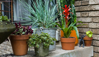 Personalize Your Container Garden