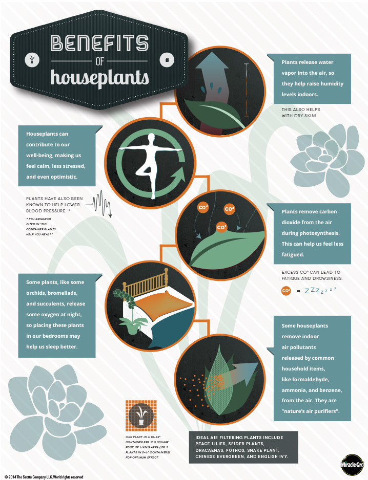 The Benefits Of Houseplants An Infographic Indoor