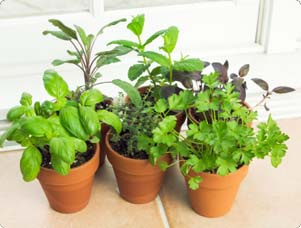 Enjoy Fresh Herbs, Even In Winter