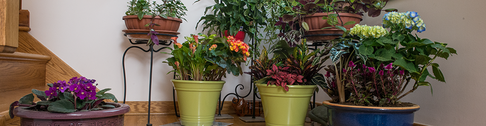indoor gardening category header