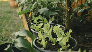 Growing Vegetables in Containers | Miracle-Gro