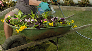 Make a Wheelbarrow Garden