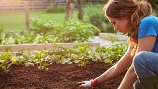 woman gardening in raised bed
