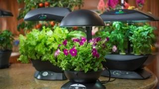 Benefits of Hydroponics: hydroponic growing systems