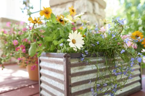 A corrugated metal container garden shows flowers in full bloom.