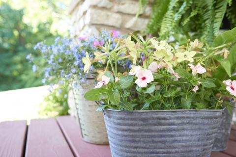 Keep Planted Containers Looking Great: mixture of annual flowers planted in metal pail and wicker basket on deck