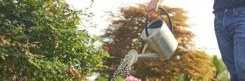 Man using a watering can to water garden.