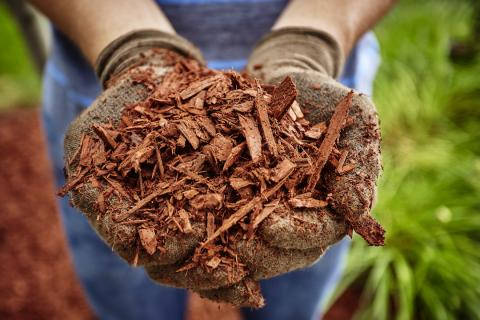 Man holding mulch in his hands.