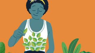 Illustration of a woman harvesting basil herbs.