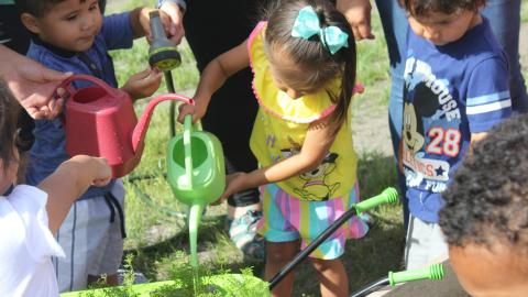 Little kids water plants using colorful watering cans.