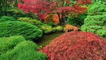 Colorful Shrubs