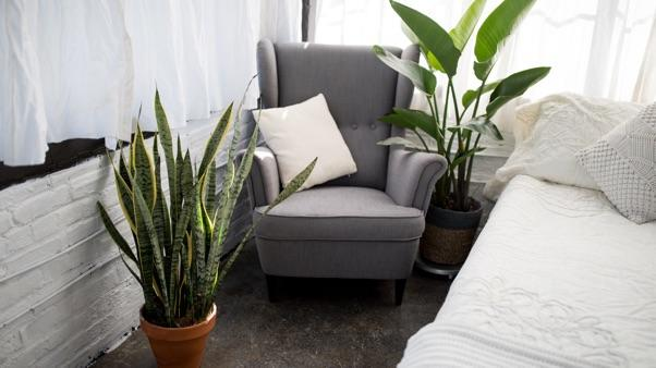 Bedroom with two large houseplants.