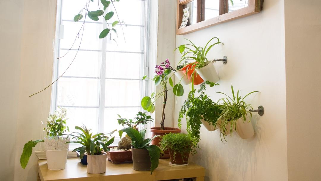 Vertical Gardening: indoor houseplants