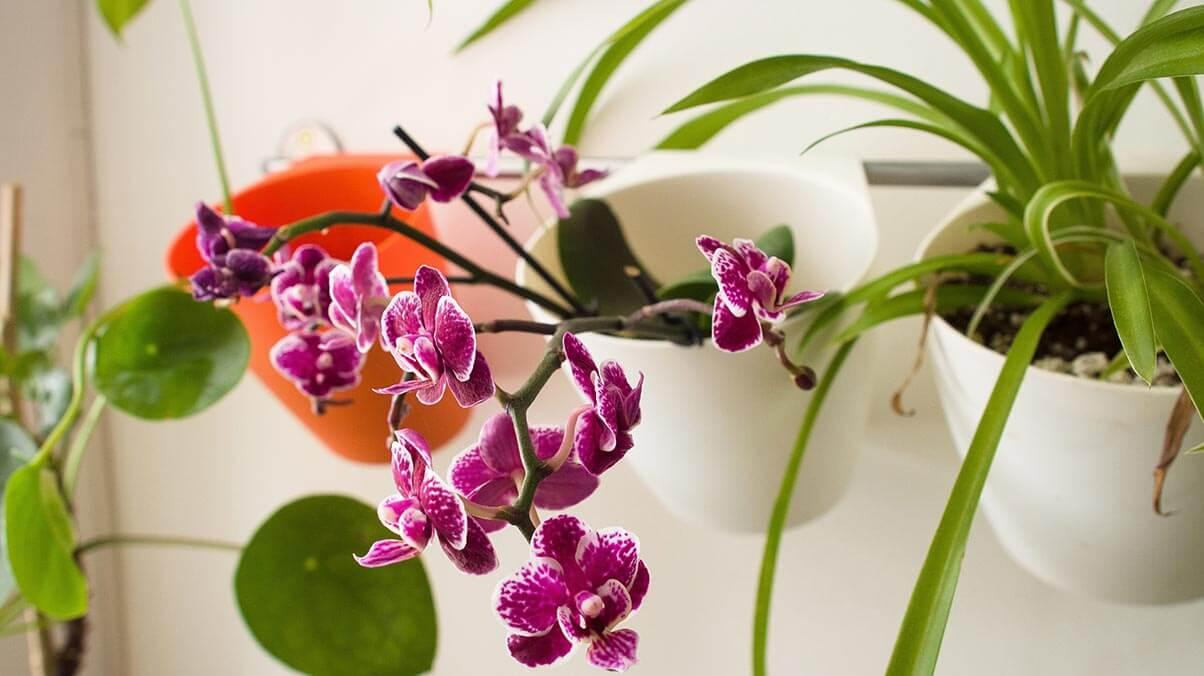 Orchids and other indoor plants hanging on the wall