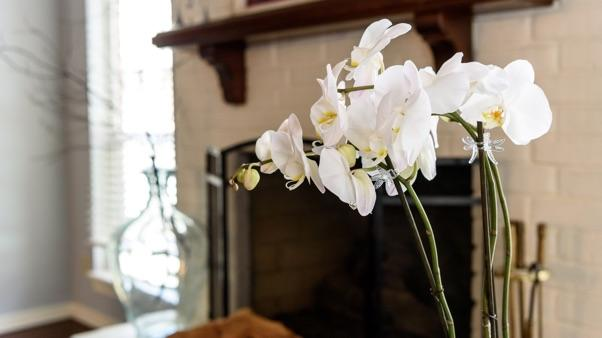 white orchid in front of fireplace