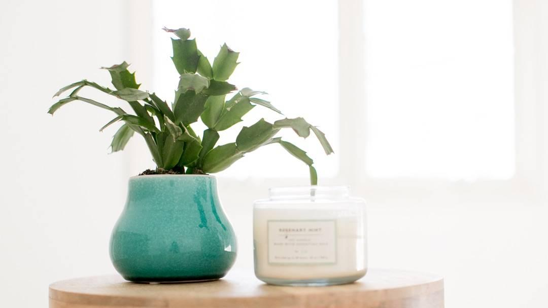 Christmas cactus in blue ceramic pot sitting next to candle on wood table
