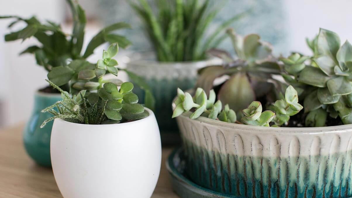 Cluster of succulent plants in containers