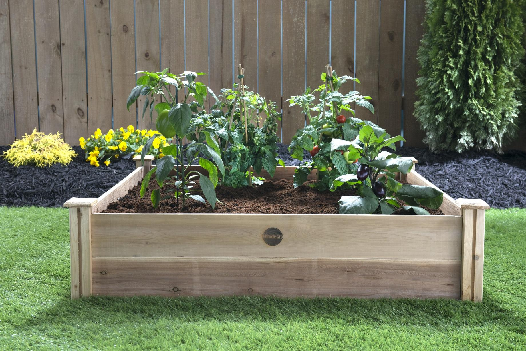 A large wooden frame houses a raised bed garden filled with nutrient-rich soil and various vegetable plants.