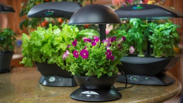 Benefits of Hydroponic Gardening - tabletop hydroponic systems