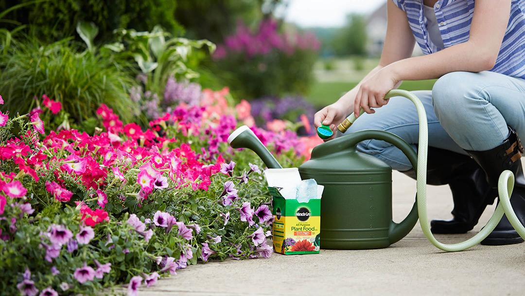 Use Miracle-Gro Plant Food