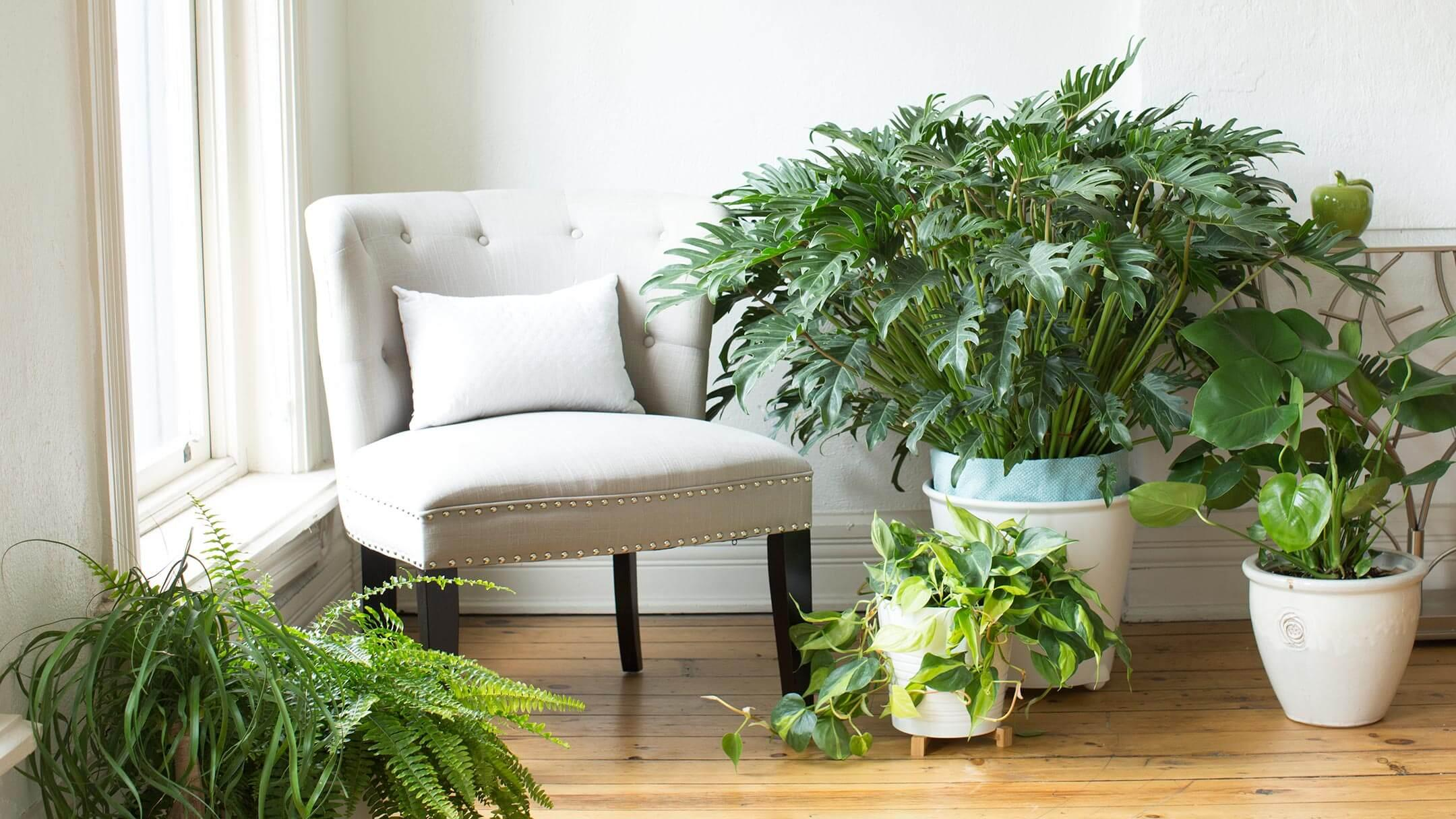 Reading chair in the corner with house plants