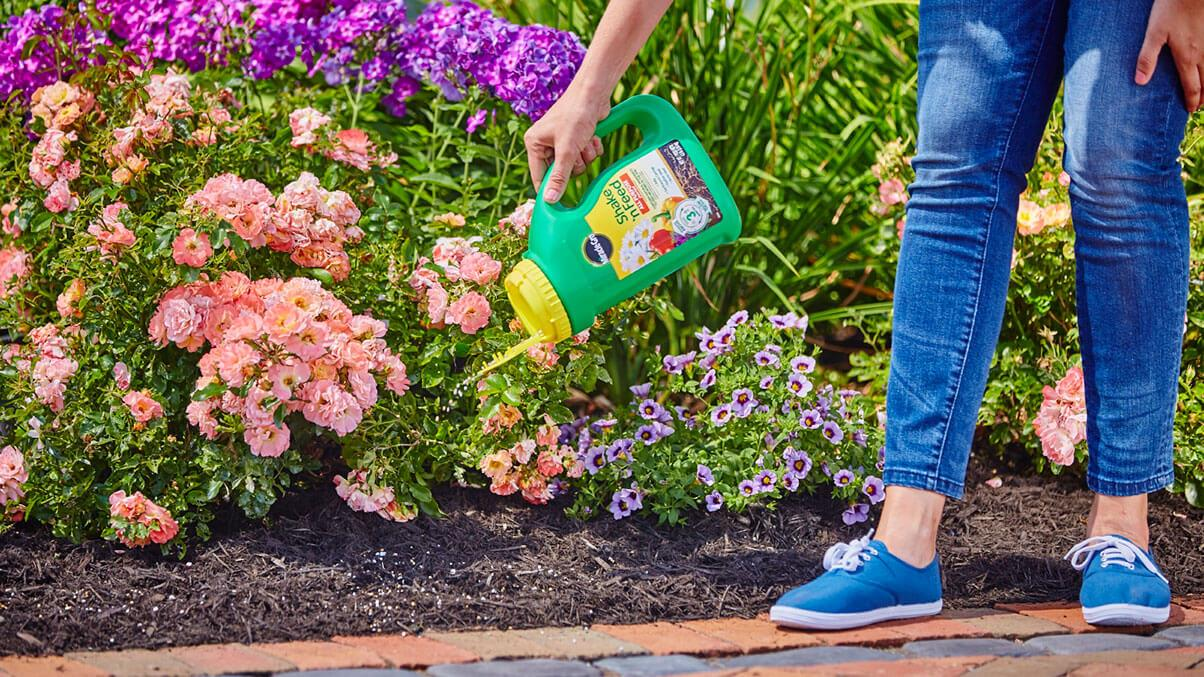 Flower garden being fed with Miracle-Gro Shake N' Feed plant food.
