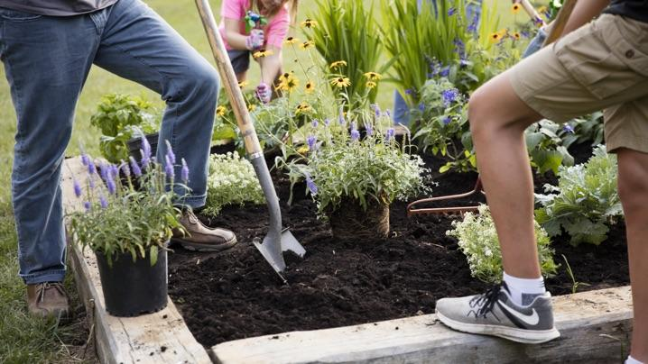 Create a Raised Bed Pollinator Garden: family planting pollinator flowers in raised bed