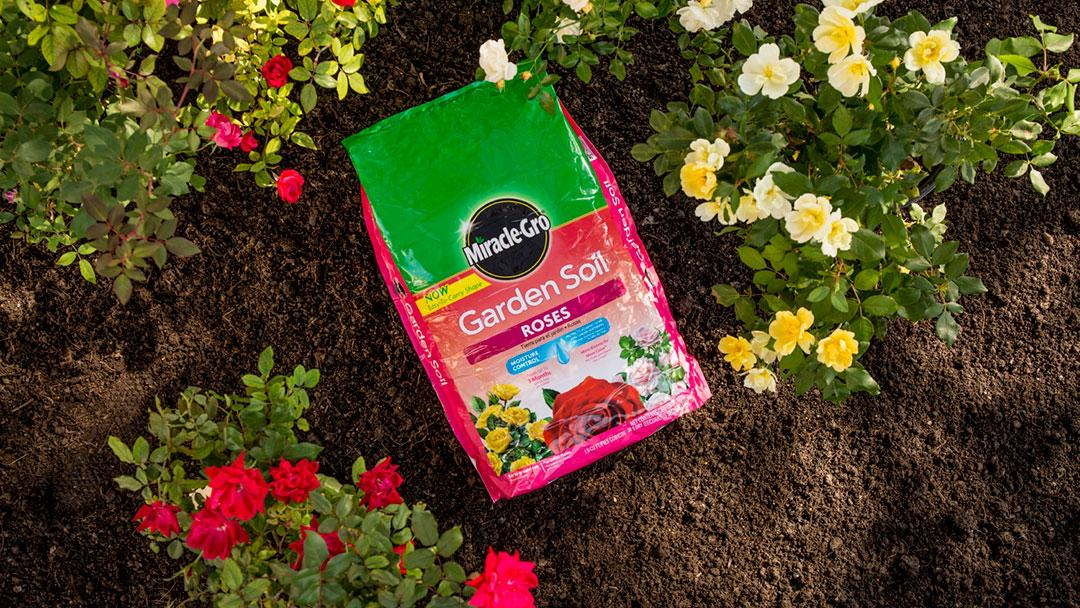 Rose Soil in Garden