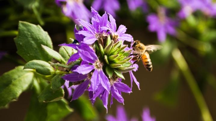 How to Attract Pollinators: bee pollinating flower