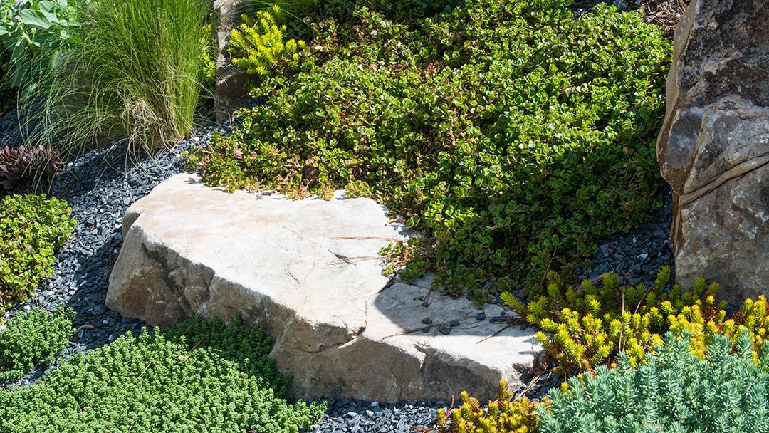 Xeriscaping Feature