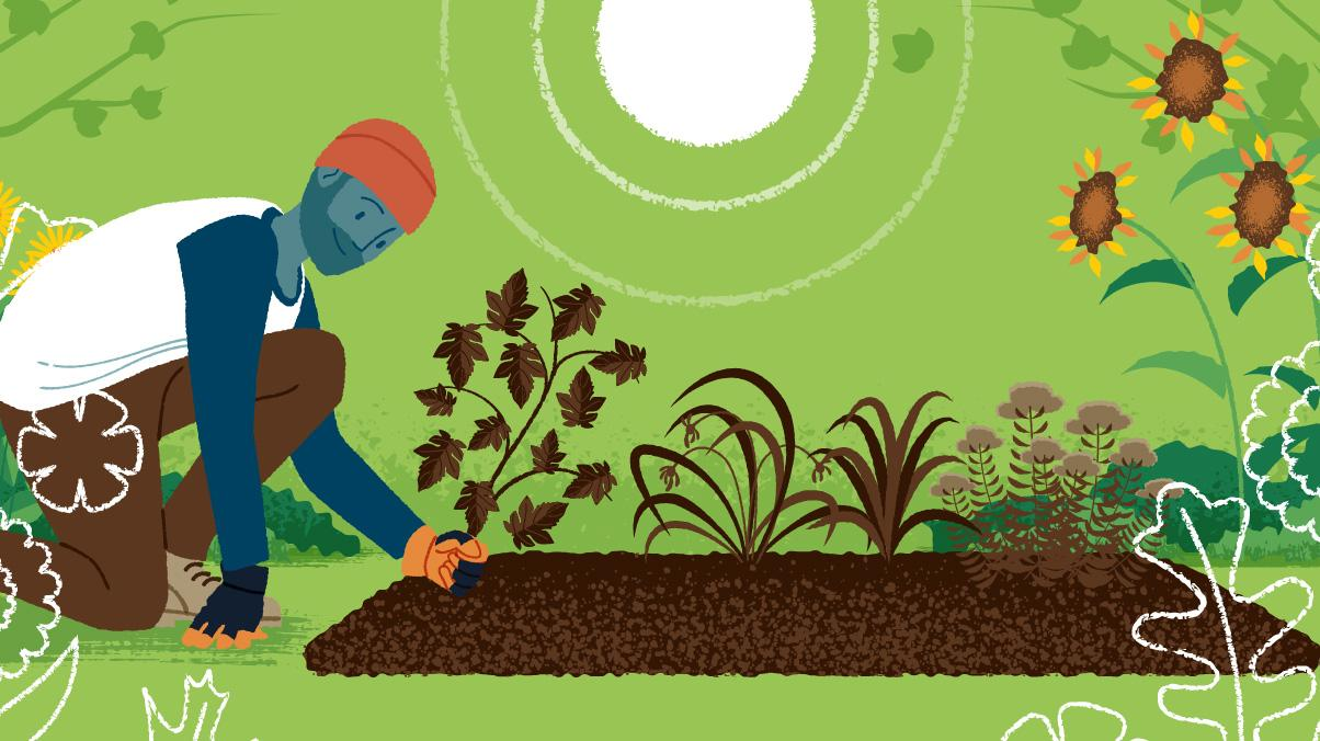 Illustration of a man pulling dead plants from a garden in the Fall.