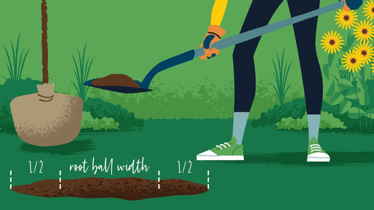 Miraculous Gardening: Illustration of a woman shoveling a hole to plant a tree.