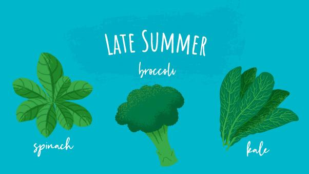 Summer Garden: Late Summer – illustrations of spinach, broccoli, and kale