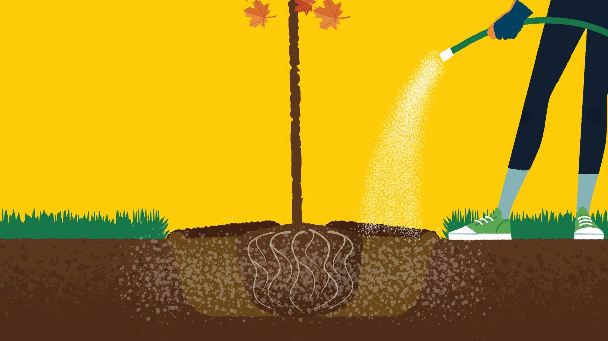 Miraculous Gardening: Illustration of a woman watering a newly planted tree with a hose.