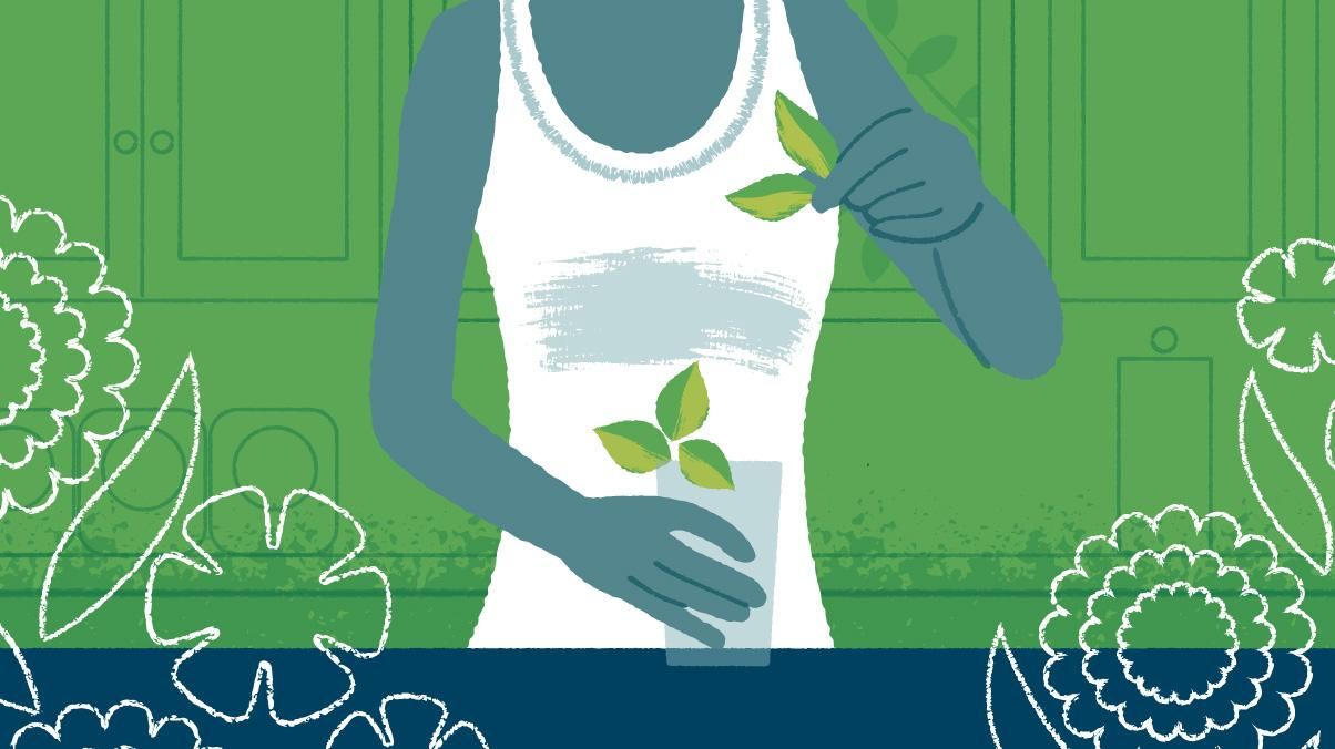 Illustration of a woman using basil for a beverage.