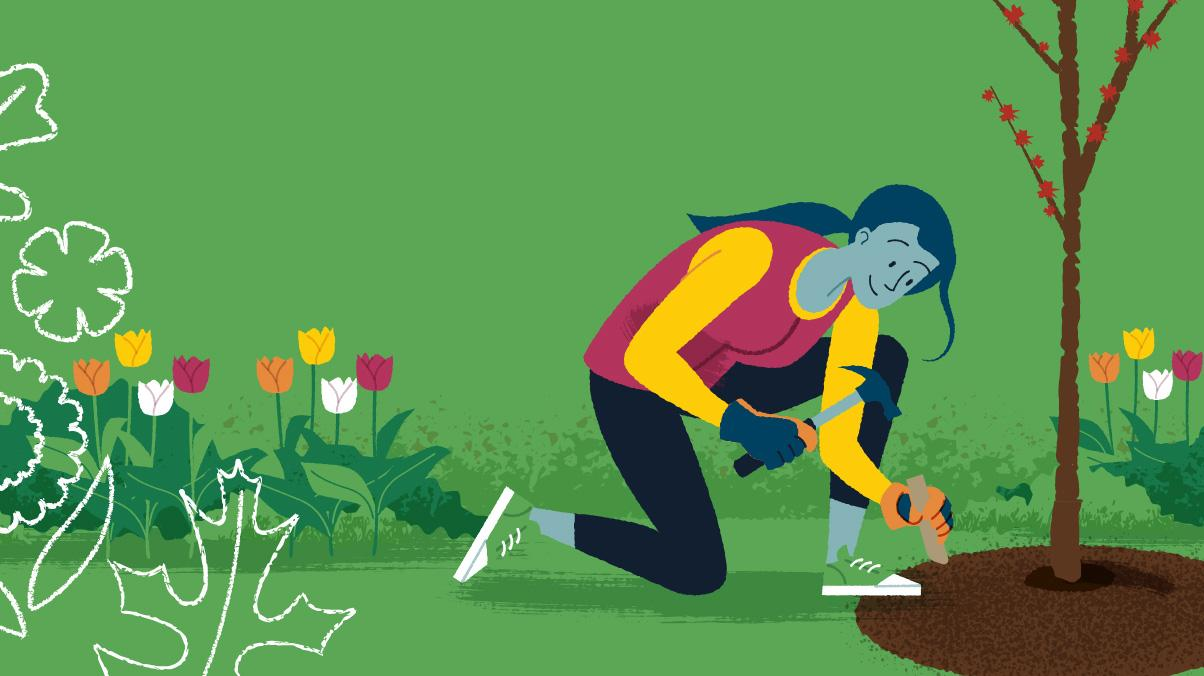 Miraculous Gardening: Illustration of a woman feeding a newly planted tree a tree and shrub plant food spike.